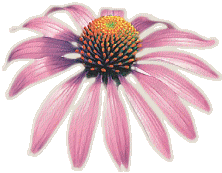 echinacea-footer